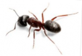 Ant Extermination & Removal Professionals in Long Island