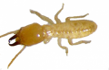 Termite Removal & Extermination
