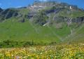 Swiss Flower Tour A